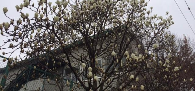 東日本大震災と福島原発事故から5年