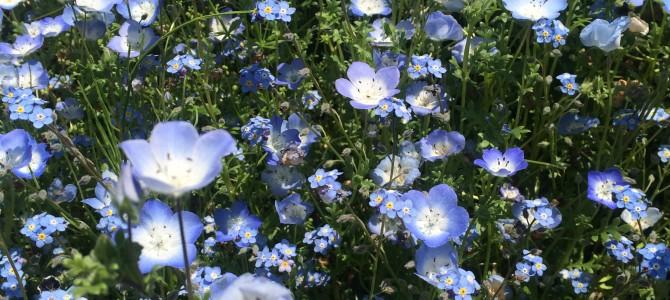 癒しの窓から見る植物観察会 2016年春・パートⅠ 参加者募集