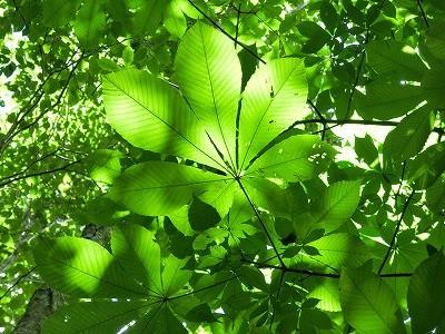 5/16(火)癒しの窓から見る植物観察会@大船植物園